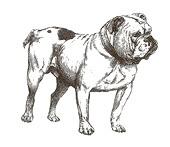 oldbulldogclipart