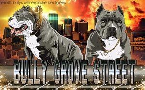 BullyGroveLogo