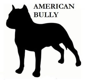 americanbully4