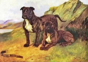 bullmastiffs1893