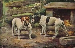 oldbulldog17